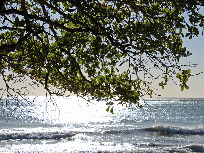Beach Lot Manzanillo
